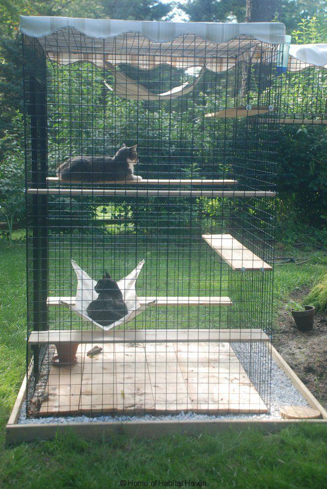 47 Best Images About Savannah Cat Habitats On Pinterest