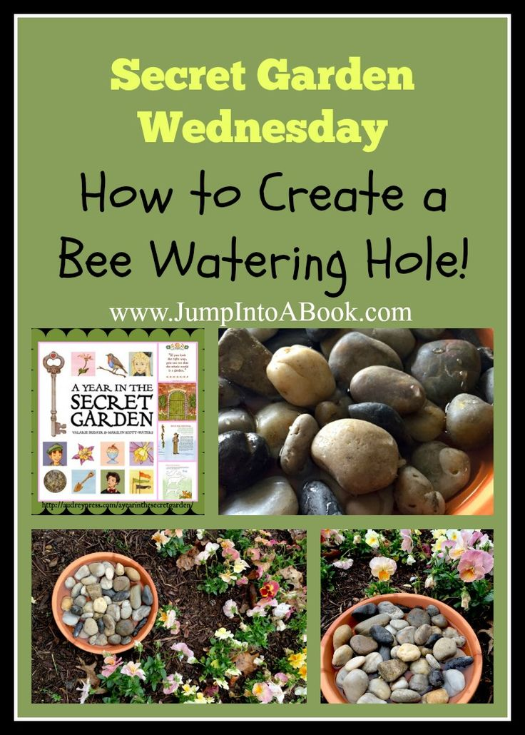 Revisiting The Secret Garden- How to make a bee watering hole.