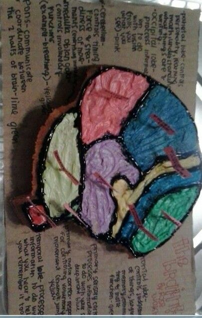 Brain Cake, made for school project c; | Cakes | Brain ...