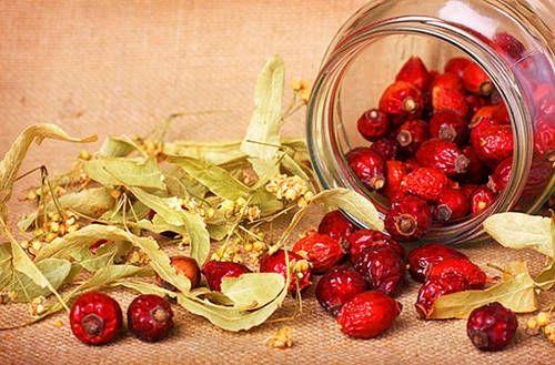 Nastala úroda šípků, radostný podzimní čas. V zimě nám dají sílu a zdraví. Výtečné jsou šípky růže plané, ale i některých okrasných kultivarů. Jak je správně sušit? Nebo jak z nich připravit chutný šípkový čaj?