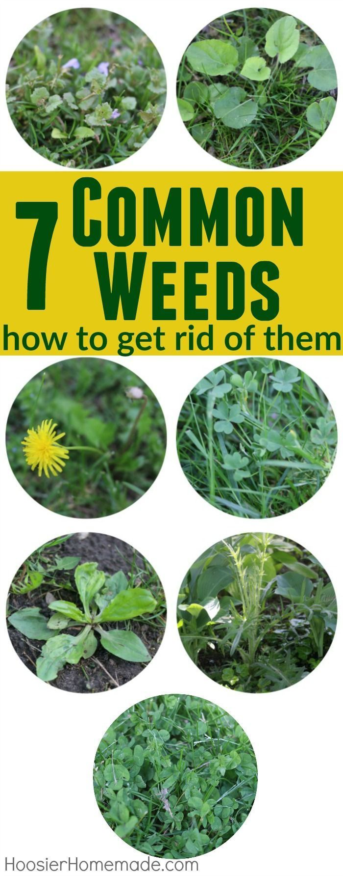 Don't let weeds ruin your lawn and landscaping! Learn how to indentify these 7 Common Weeds with Identification Pictures, and get RID of them for good!