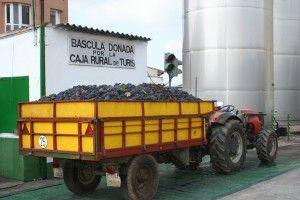 Báscula http://75centilitros.es/fotos-de-la-vendimia-2013-en-la-baronia-de-turis/