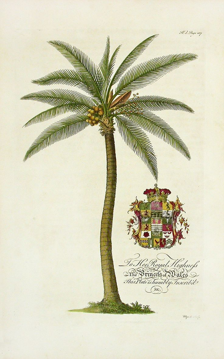 Georg Dionysius Ehret Botanical Prints from The Natural History of Barbados ...panteek.com