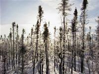 Skovbrande har en afkølende effekt på klimaet - dr.dk