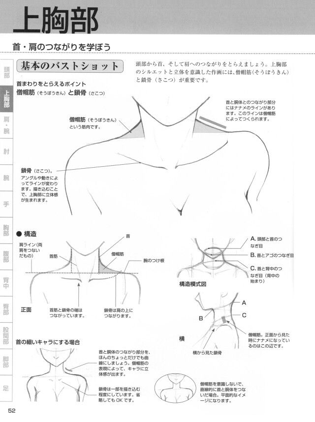 How to draw shoulders, collarbone, and neck. -- Drawing tools, inspiration, creativity, tutorial, reference sheet, guide