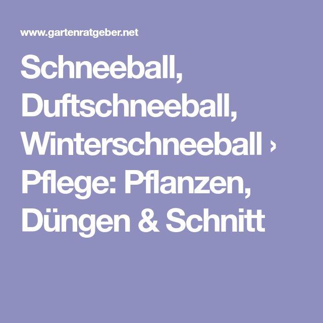 Schneeball, Duftschneeball, Winterschneeball › Pflege: Pflanzen, Düngen & Schnitt
