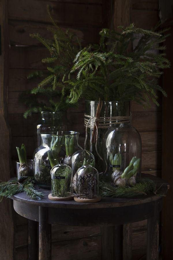 Bildkälla Jag är av den sorten att man inte behöver så mycket julpynt för att göra det juligt hemma. Det enda som behövs är egentligen växter för att kunna plocka fram den där juliga känslan. Sen kan...