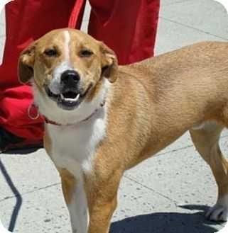 Elmsford Dog Training