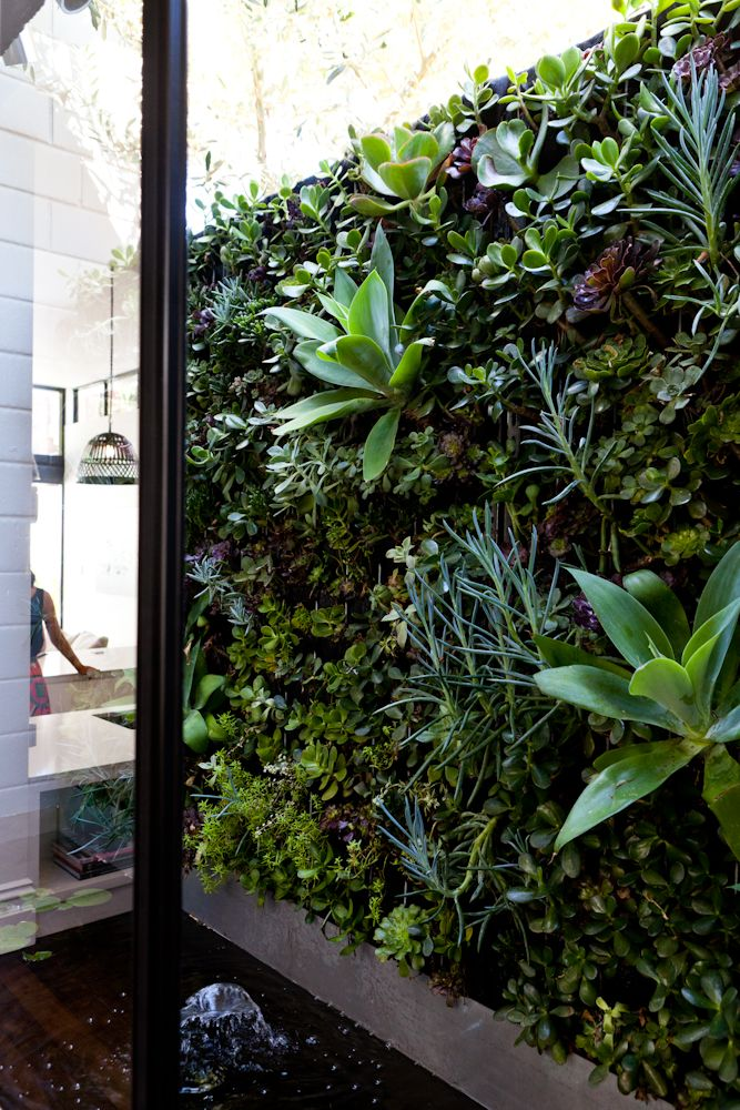 West Leederville Renovation by Studio Atelier - Vertical green succulent wall designed and made by SA