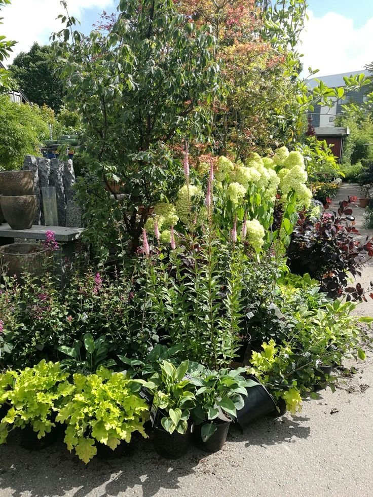 ...limegrön alunrot och veronica (longifolia) 🌱💗