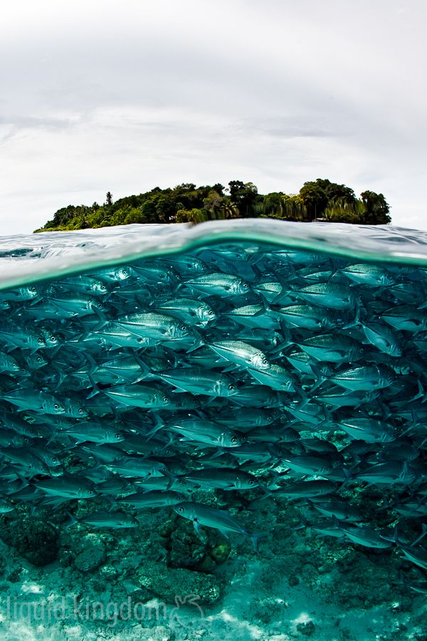 Diving, Sipadan (Malaysia). 'Sometimes it seems as if the world's most colourful marine life considers the seawall of Sipadan to be prime real estate. They live here, play here, hunt here and eat here, and you, lucky thing, may dance an underwater ballet with them.' http://www.lonelyplanet.com/malaysia/malaysian-borneo-sabah/semporna-and-pulau-sipadan