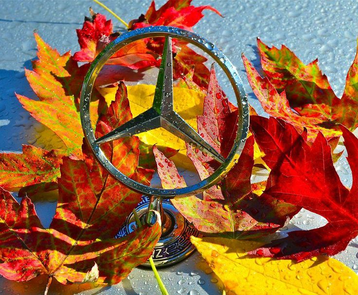 Its a Sweet Home Alabama Fall Time at Mercedes-Benz International, United States in Tuscaloosa County(Vance),AL