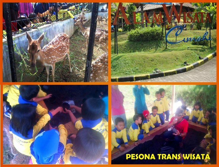 Tumbuh dan berkembang dalam kekompakan dan teraksi dengan alam #PesonaTransWisata. PIN 2A82A1F9
