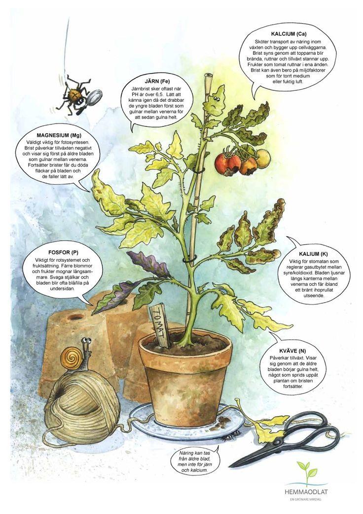 Näringsbrister växter