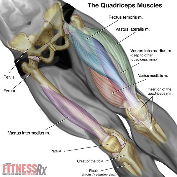 103 best muscles images on pinterest, Muscles
