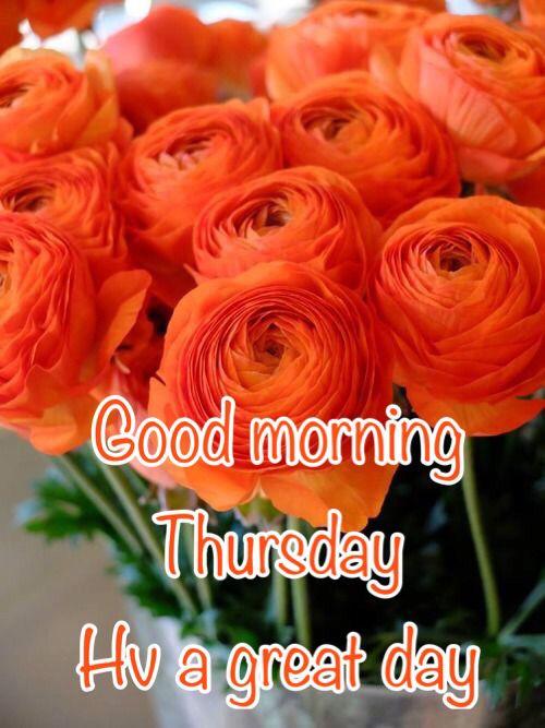Good Morning Orange Flowers : Best images about happy thursday on pinterest