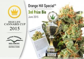 Cannabis Cup Success For Night Queen And Orange Hill Special