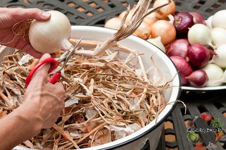 Как правильно хранить лук в домашних условиях, в квартире, погребе. Температура хранения лука, влажность, тара для хранения, чтобы не прорастал до весны на балконе
