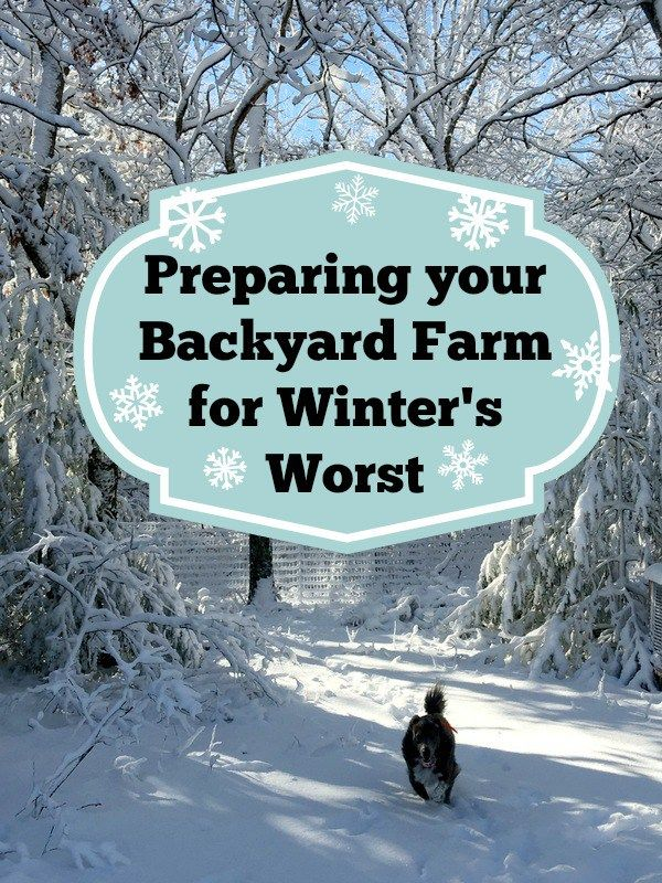 Is your backyard farm ready for winter storms? Check out how we are getting ready