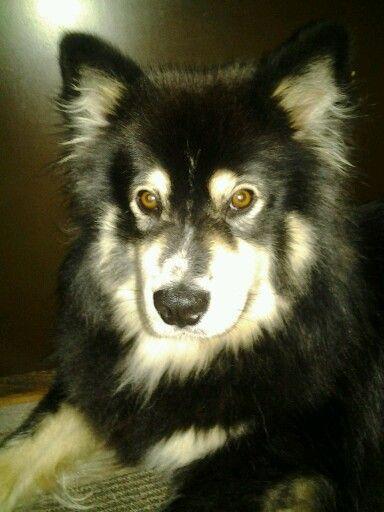 mun koira
