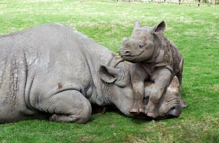 """Susie said: """"I'll protect you, Mama!""""    [Photograph source unknown]~[Posted by: sms on Pixdaus]  'h4d'120913"""