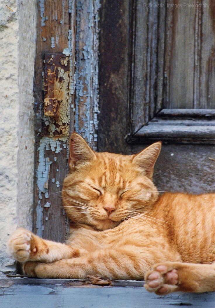 Orange tabby cats, Curious cat, Tabby cat