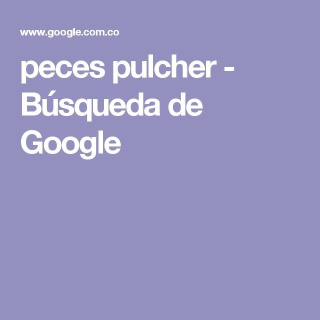 peces pulcher - Búsqueda de Google