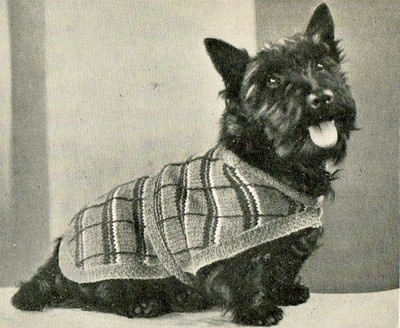 Knitting Patterns Dog Breeds : Vintage 1930s knitting pattern for terrier breed dog coat 14 inches in length...