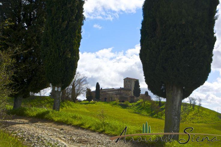 Homestead close to Vescovado di Murlo. Casolare vicino a Vescovado di Murlo.