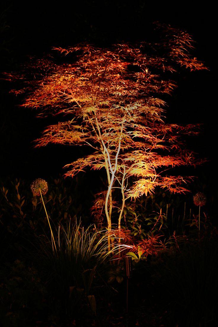 Spotverlichting onder esdoorn