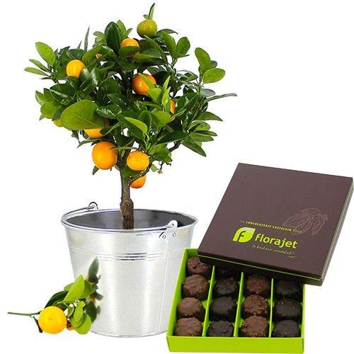 17 meilleures id 233 es 224 propos de arbuste en pot sur arbuste japonais plantes 224