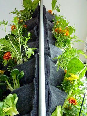 Plants On Walls Vertical Gardens: Aquaponic Vertical Vegetable Garden