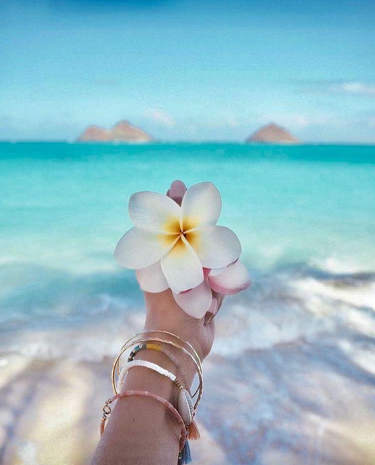 Tropical Flowers Over Blue Water I Ve Got Wanderlust Beach Wallpaper Summer Wallpaper Beach Aesthetic