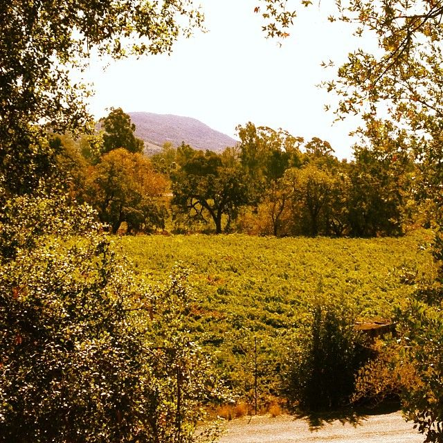 Ravenswood Winery is a Zinfandel specialist and one of the best vineyards in the Sonoma Valley.
