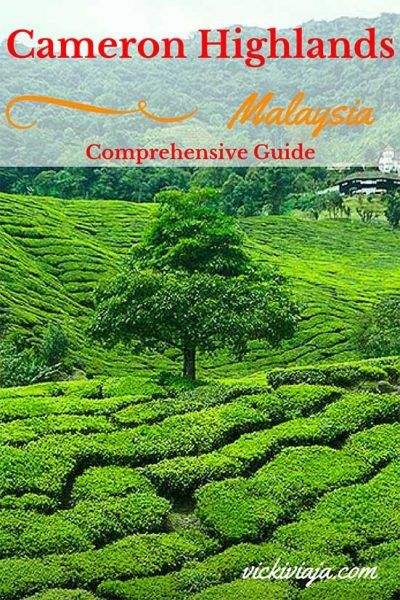 The Tea Plantations & the Mossy Forest Cameron Highlands are a true highlight Tour of every trip to Malaysia. Seeing the beautiful nature is absolutely worth a visit. Learn everything you need to know for your trip to the Mossy Forest Cameron Highlands here.