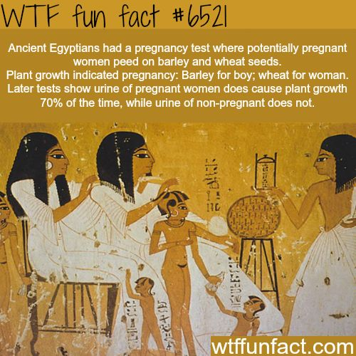 Ancient Egyptians pregnancy tests - WTF fun facts