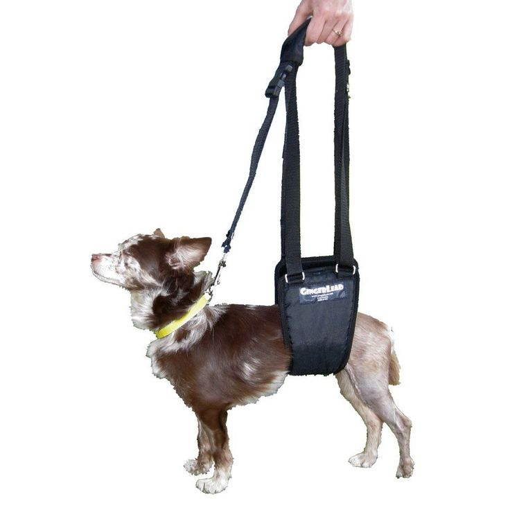 7 Dog Wheelchairs And Mobility Aids To Help Your Dog Move. 17 Best ideas about Aide Handicap on Pinterest   Handicap