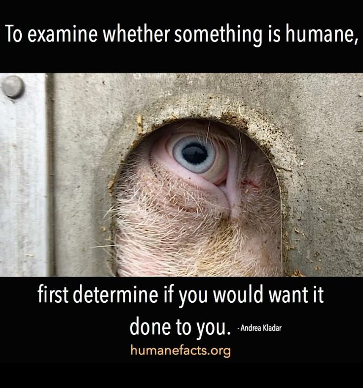 """To examine whether something is humane, first determine if you would want it done to you""  God's creatures count.  Animal welfare"