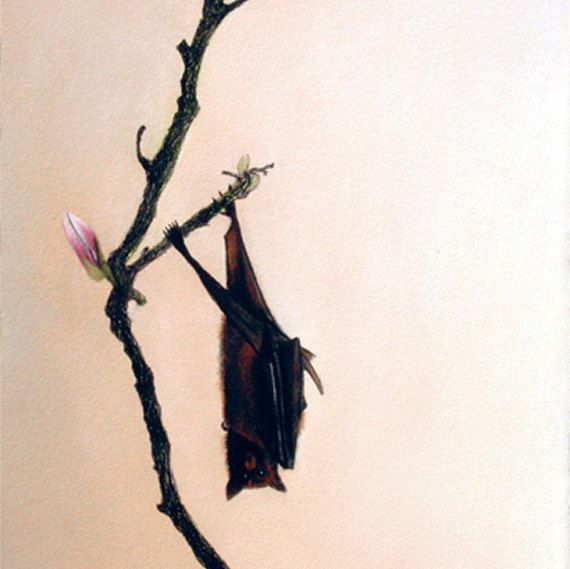 blank card  hanging fruit bat  magnolia tree  by KatkasArtStudio