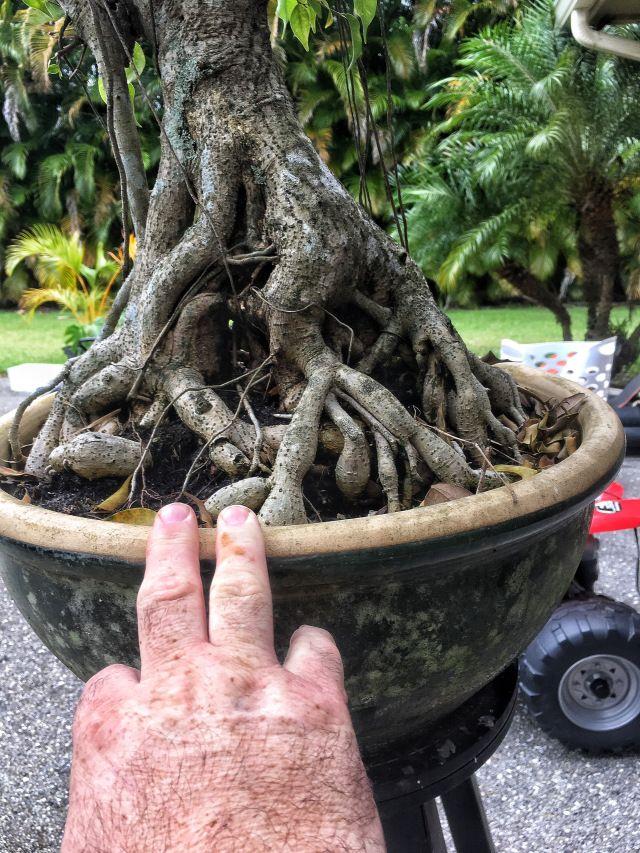 Https Adamaskwhy Com 2016 11 17 How Many Times Have You Heard Someone Call A Bonsai A Frankentree Bonsai Tree Care Bonsai Tree Types Bonsai Tree