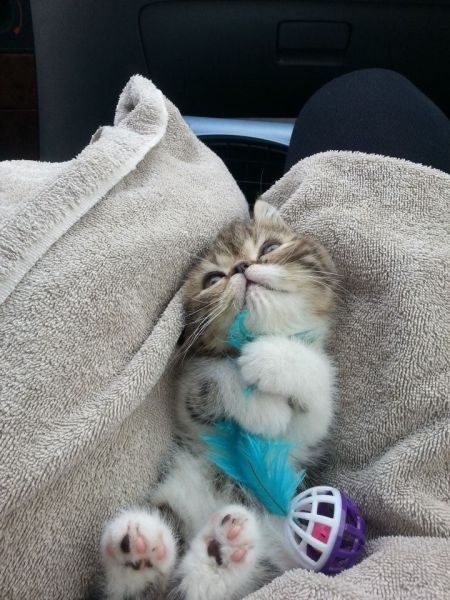 I wish I wasn't allergic to cats. Look at those little paws!