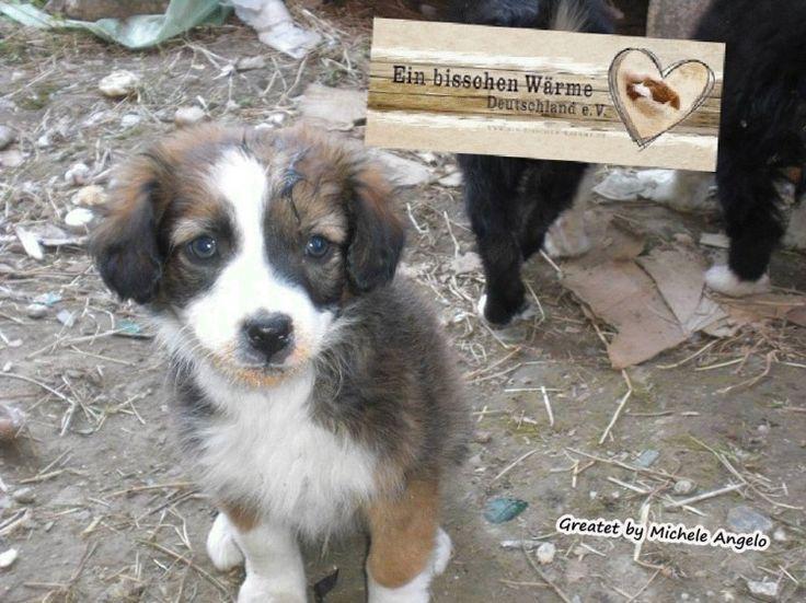 7 erwachsene Hunde, drei Welpen und eine Mami mit Babys aus dem Shelter. Auf der Straße lagen  4 Welpen und einen erwachsenen Hund, die sind nun bei mir an einem sicheren Platz)  Danke fürs durchlesen sagt euch Michele Angelo Tierschutz Tiere  Tierrettung  #Rumänien Notfall #Strays Tierheim Shelter Europa EBW StopKilling