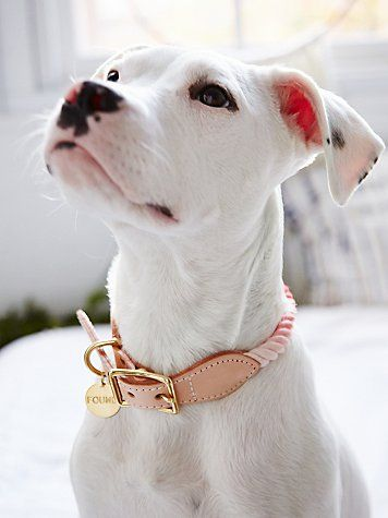 "Overdyed Rope Collar | Dip-dyed rope dog collar with adjustable leather buckle closure. Has metal tab that says ""FOUND"" on it. The small size of this collar is perfect for a small to medium sized cat!  Made in Brooklyn, NY."