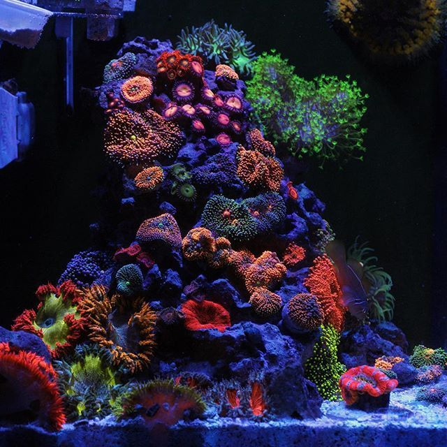 174 best reef aquariums images on pinterest reef for Reef aquarium fish
