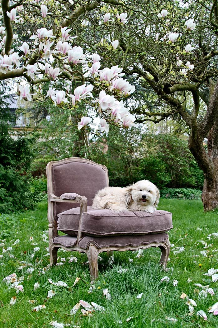 Taupe velvet french style armchair. Add some luxury from MOLLYSHOME.COM
