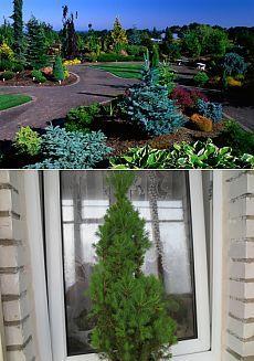 Удобряем хвойные и лиственные древесные породы - Садоводка