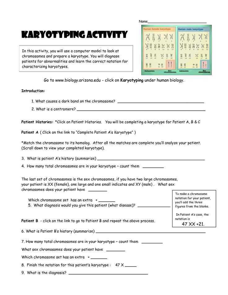 karyotyping activity doc genetics pinterest activities. Black Bedroom Furniture Sets. Home Design Ideas