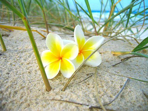 Frangipani Beach, Australia #LuvBBW