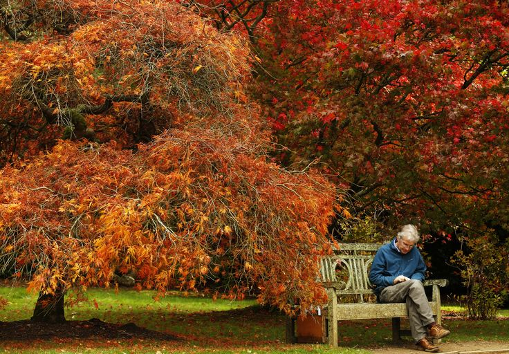 A man reads under trees in fall color at Sheffield Park Garden near Haywards Heath in southern England.