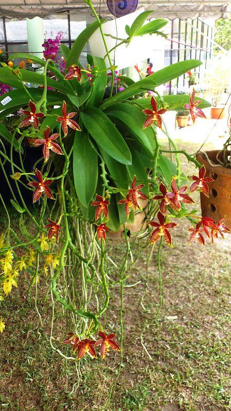 OrchidCraze: June 2012